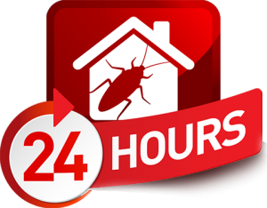 24 hour pest control services london